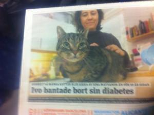 Tjocka katter - första sidan av dagens Metro