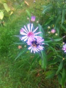 blommor och bin på tomten