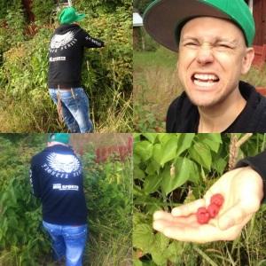 hamwid i hallonbusken - blev mycket bär i dalarna
